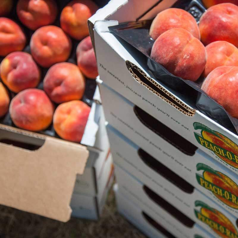 Find many peach varieties during Peach-O-Rama at Metropolitan Market